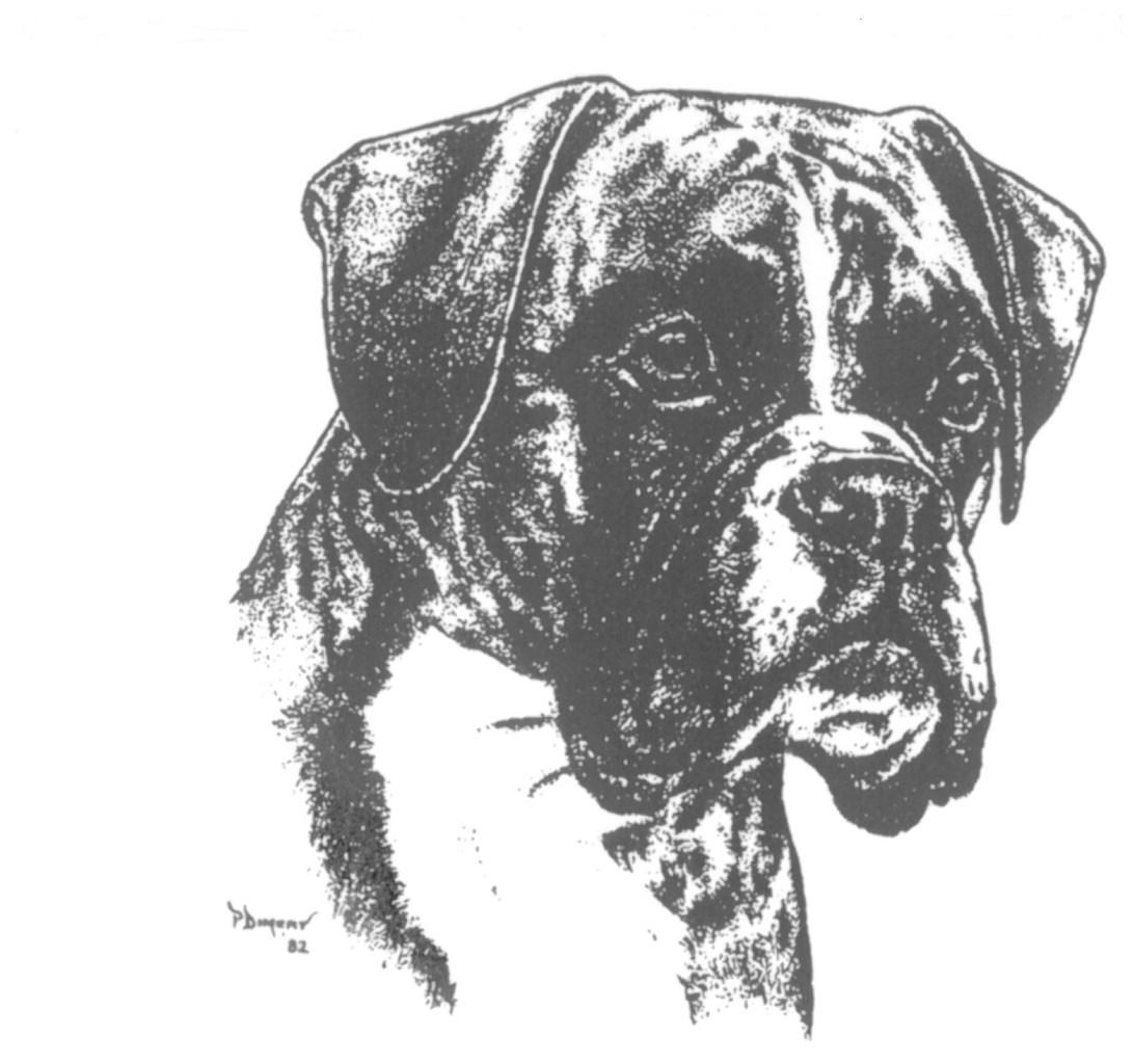gewicht boxer hund