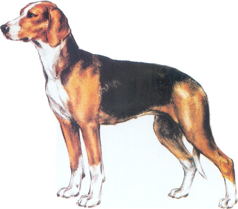 Serbian Dog Names
